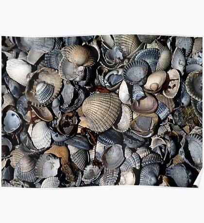 Shells. II Poster