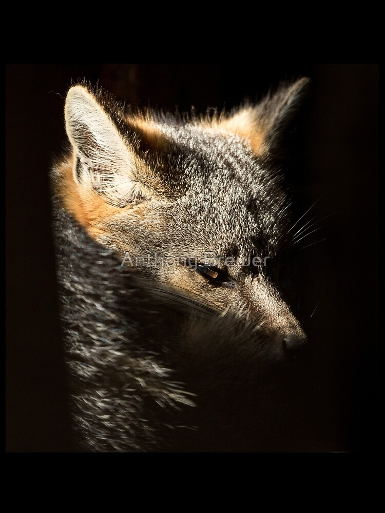 Fox in a sunbeam by dailyanimals