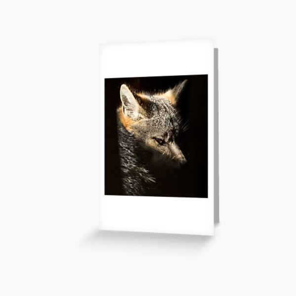 Fox in a sunbeam Greeting Card