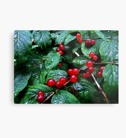 Rainy berries Metal Print