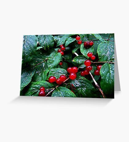 Rainy berries Greeting Card
