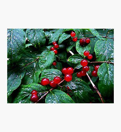 Rainy berries Photographic Print