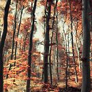 Fall in the woods by Pascal Deckarm