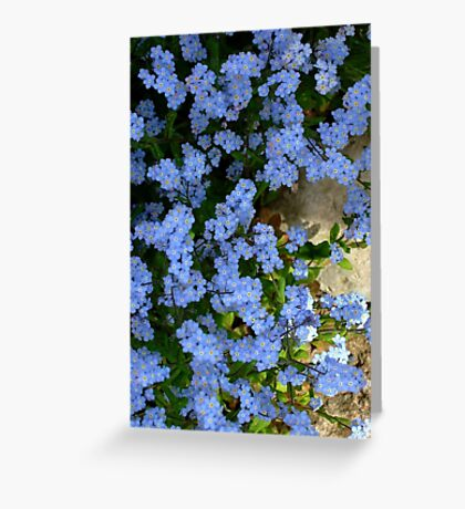 Forget me not. II Greeting Card