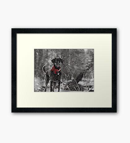 Dashing Through the Snow... Framed Print