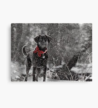 Dashing Through the Snow... Canvas Print