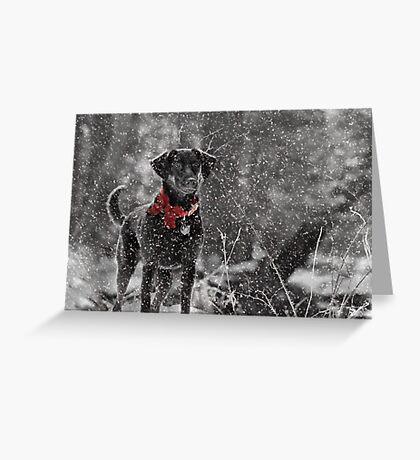Dashing Through the Snow... Greeting Card