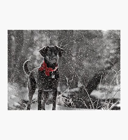 Dashing Through the Snow... Photographic Print