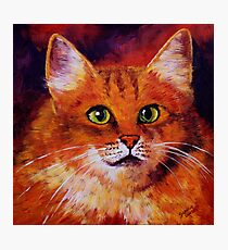 Longhaired Ginger Cat Photographic Print