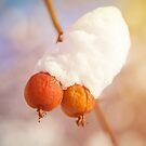 Winter berries covered with snow on a tree by Lukasz Szczepanski