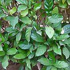 Garden Green Leaves by Looly Elzayat