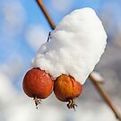 Two winter berries covered with snow on a tree by Lukasz Szczepanski