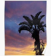 Silhoutted Palm Lighter sky Poster