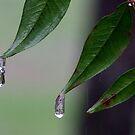 Icy Rain in NC #2 by Lolabud