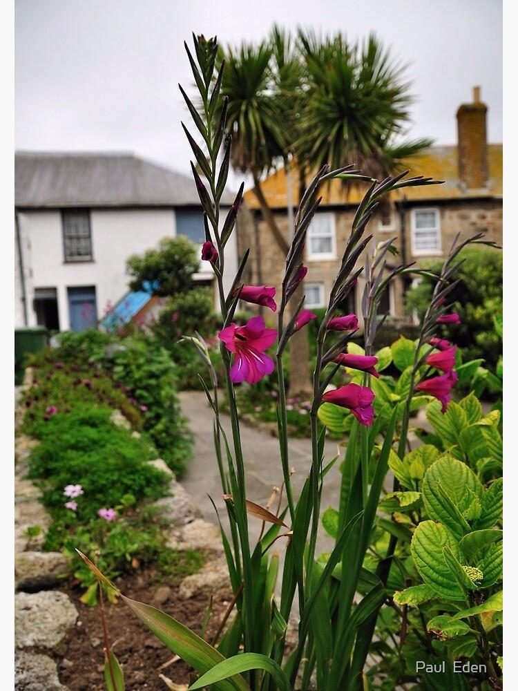 Flowers In a Border by pauleden