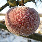 Frozen Apples by Dean Harkness