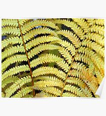Autumn Fern Poster