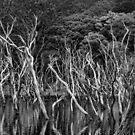 Dead Water by TristanPhoenix