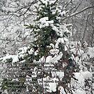 der Schnee vom Himmel von WalnutHill