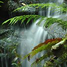 Layers of Water - Blue Mountains,NSW by Dilshara Hill