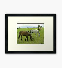 Three in a row Framed Print