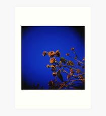 Holga Sunflowers Art Print