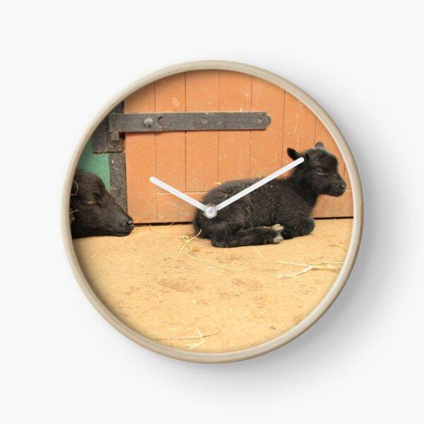 Vauxhall City Farm - Ewe & Lamb (Clover & Anise, Sleepy) Clock