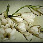 Flowery Fragrant Freesia by CJ Anderson