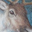 Reindeer (Rangifer tarandus) by elinjohnsen