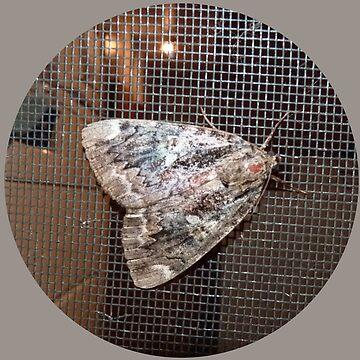«Papillon de nuit» par martinb1962