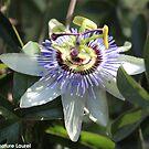 Awesome Flower by signaturelaurel