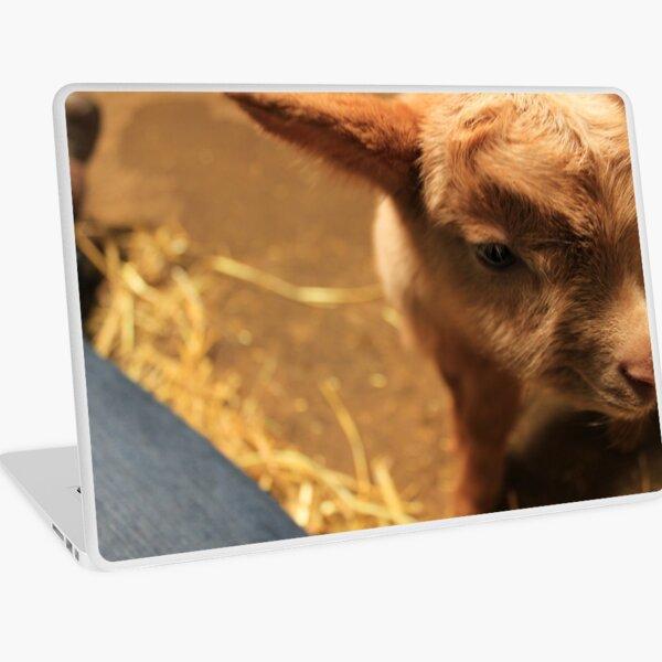 Vauxhall City Farm - Goat Kid (Pebbles) Laptop Skin