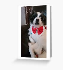 Rosie in her bow tie Greeting Card