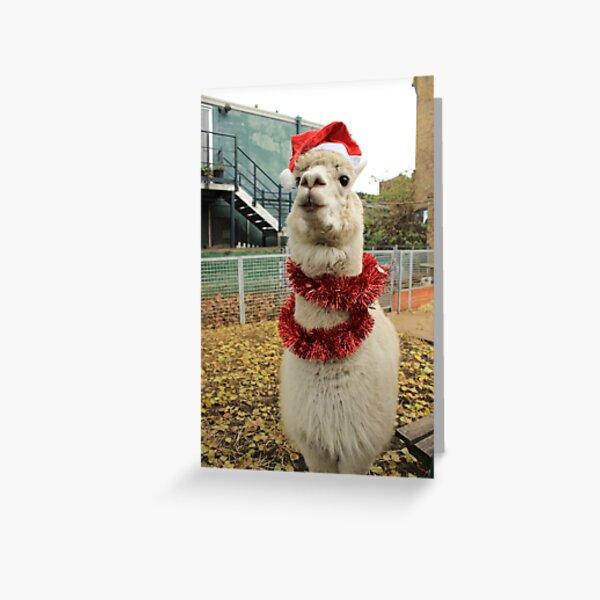 Vauxhall City Farm - Alpaca, Christmas (Jerry) Greeting Card