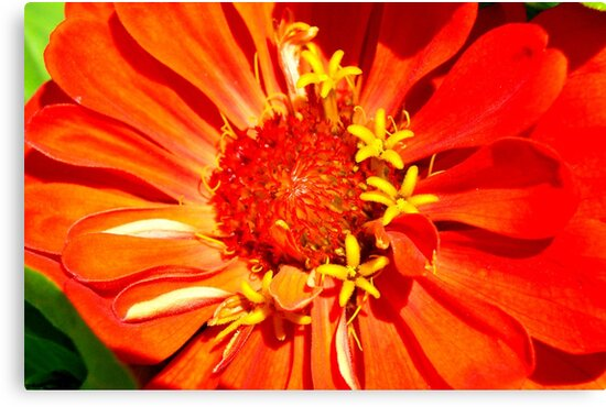 Macro Flowers IV by Tricia Stucenski
