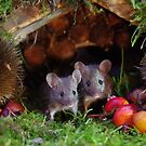 two little mice in a log pile house by Simon-dell