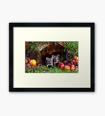 two little mice in a log pile house Framed Print
