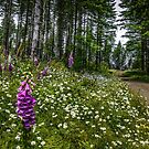 Fox Gloves by Charles & Patricia   Harkins ~ Picture Oregon