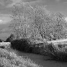 Autumn Rhyne Infra-red by kernuak