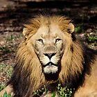 King by Bob Hardy