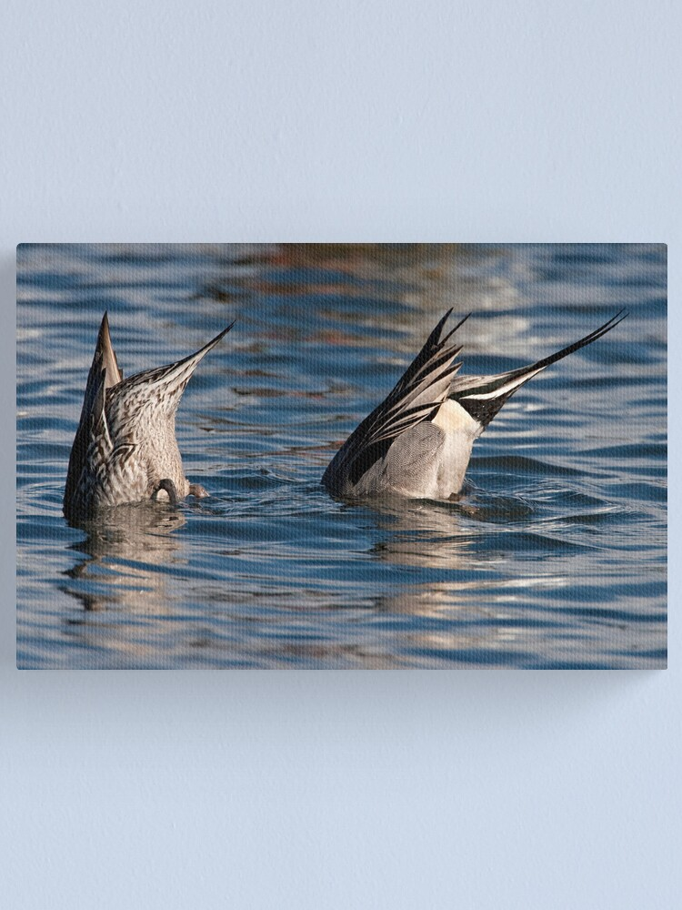 Alternate view of Ducks in Sync Canvas Print