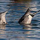 Ducks in Sync by Martin Smart