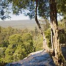 Mt Field National Park, Tasmania by SusanAdey