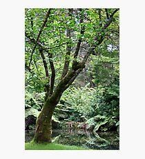 Restful Photographic Print
