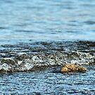 Lake Meade by Susanne Correa