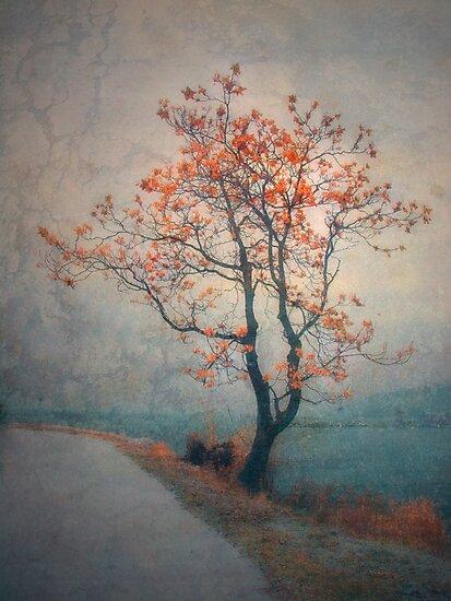 Between Seasons by Tara  Turner