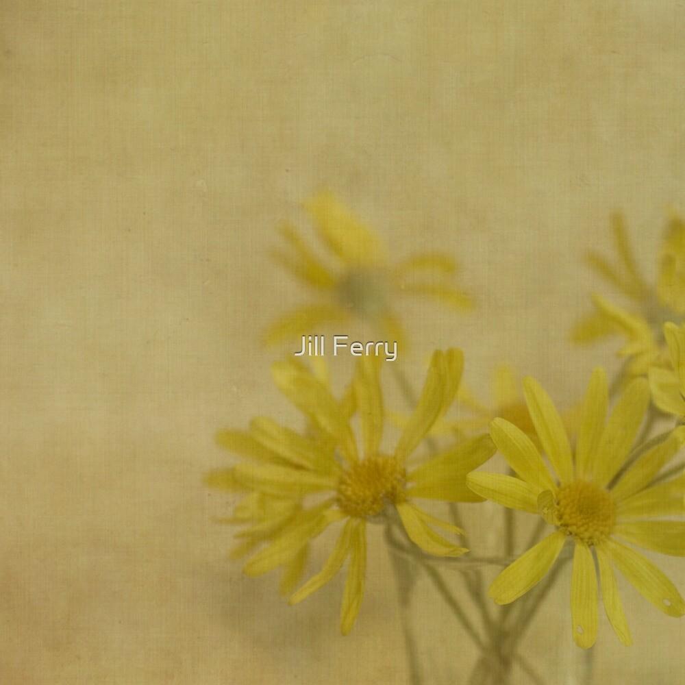 Golden Daisies by Jill Ferry