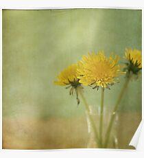 Dandelion Wine Poster