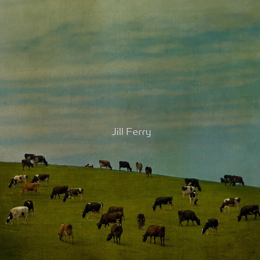The herd by Jill Ferry