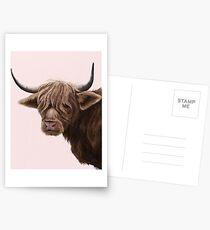 highland cattle portrait  Postcards